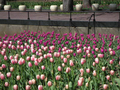 日比谷公園花壇